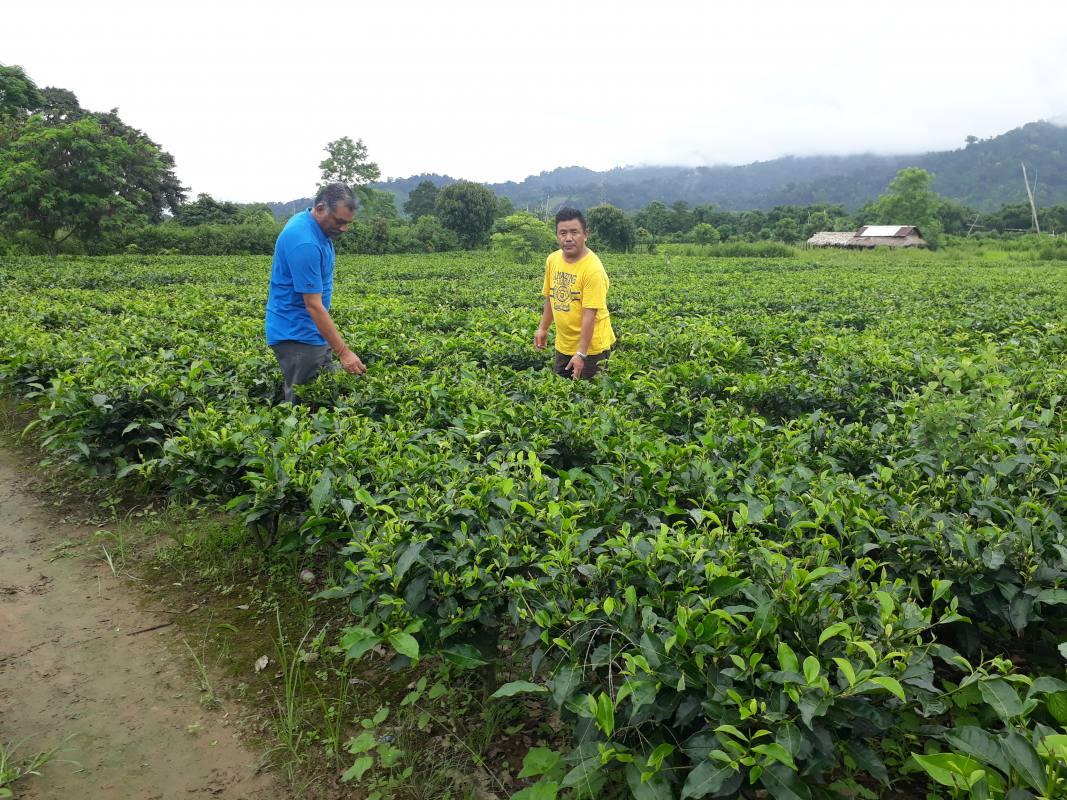 Teeplantage Miao Projekt für Tibeter